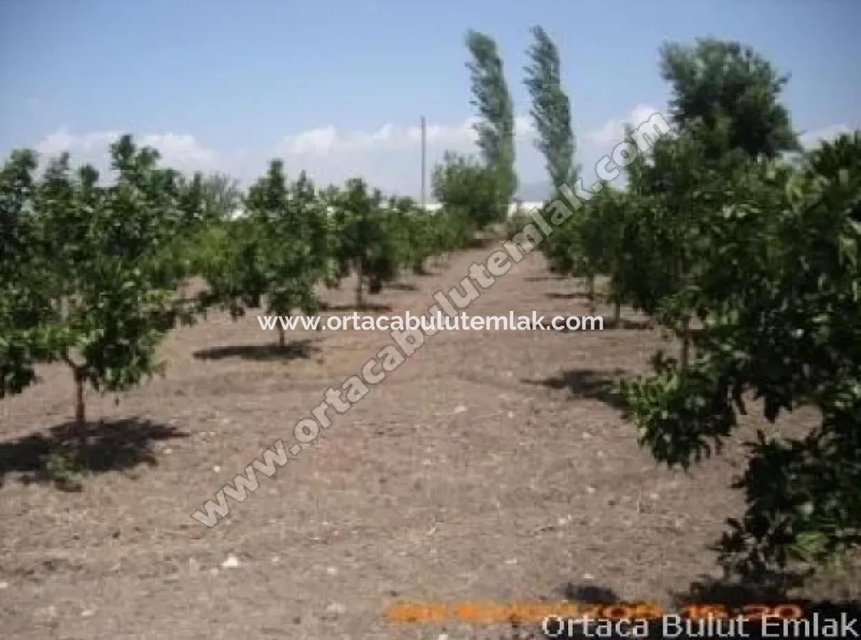Muğla Ortaca Yeşilyurt Köyün De Narince Bahcesi İçin De Ev Var