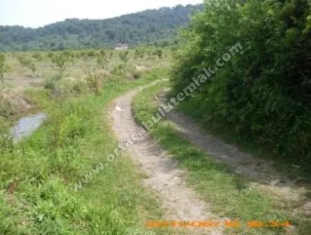 Muğla Ortaca Mergenli Köyün De Kelepir Tarım Arazi 26 Dölüm Satılık