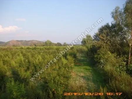 Muğla Ortaca Güzelyurt Malesin De  10500 M2 Narbahcesi Satılık
